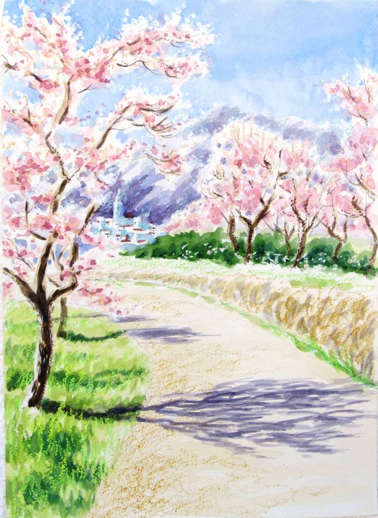 Almond blossom view.