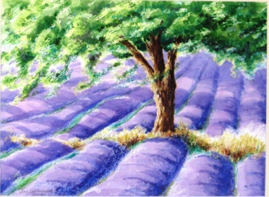Field of lavender.