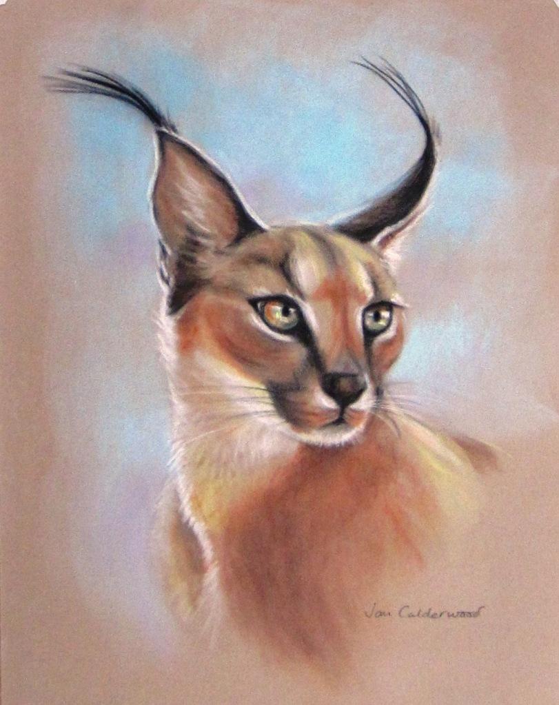 Portrait of a lynx