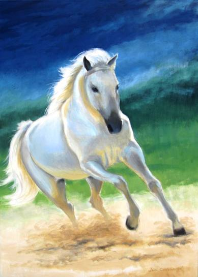 White Arab stallion cantering.