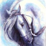 Head of grey Andalusian stallion