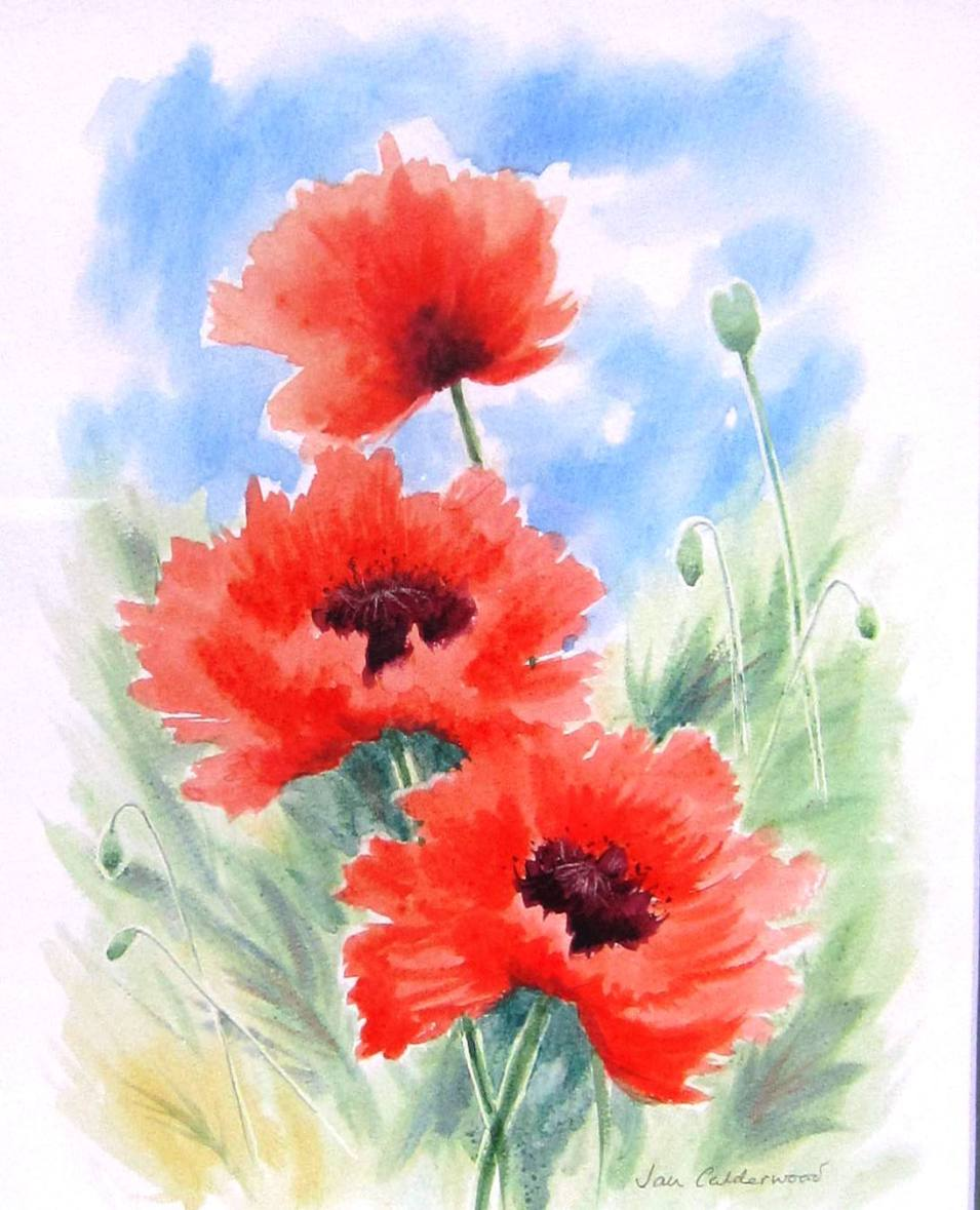 Poppies in a meadow