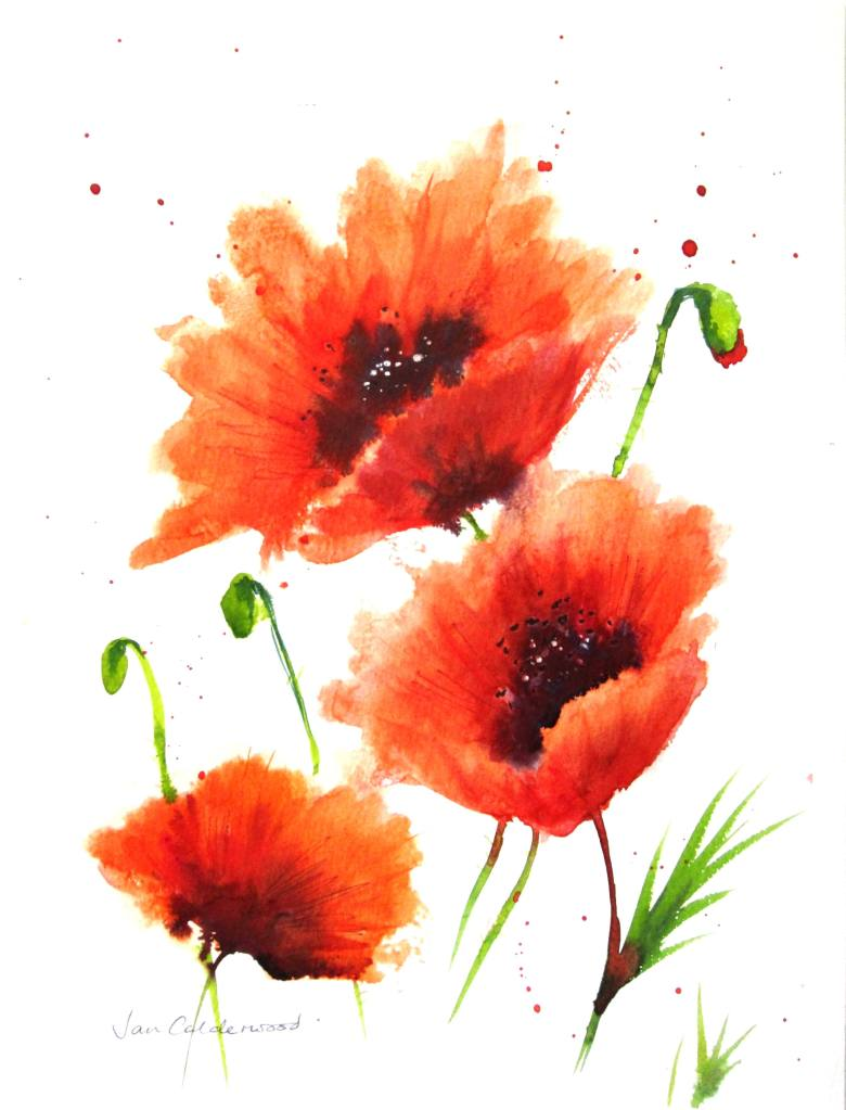 Poppies in a breeze