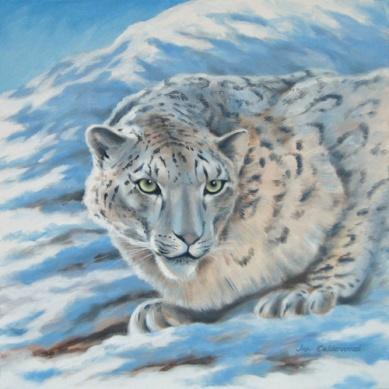 Himalayan snow leopard.