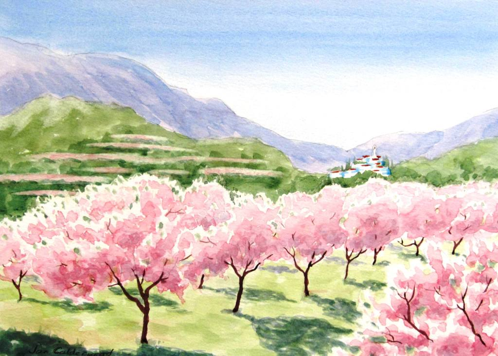 Almond blossom in Spain