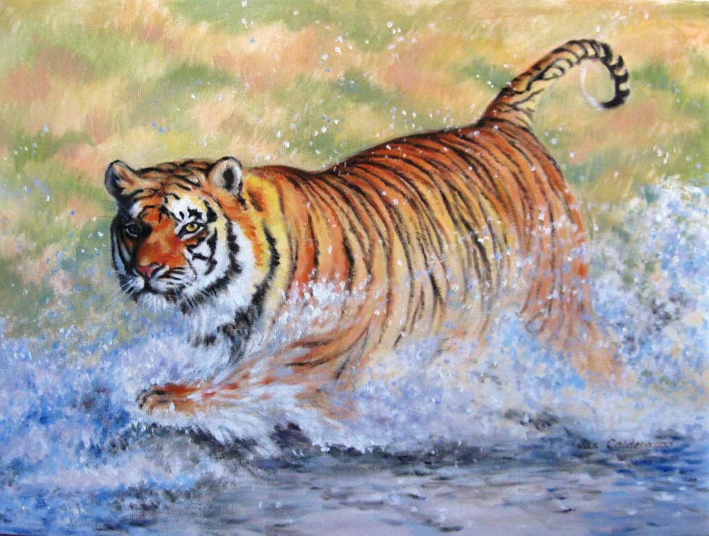 Tiger hunting by the river