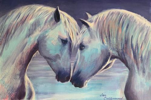 Horse, horses, Camargue, France, equine